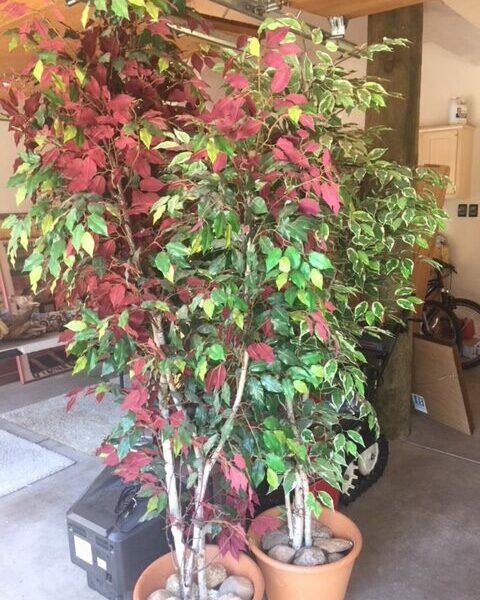 751-Eagle-Tahoe-Estate-Sale005